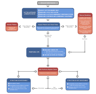 Pediatric BLS Two Rescuer Algorithm
